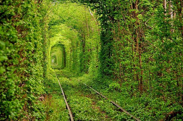 Тоннель любви к Клевани Ровенской области